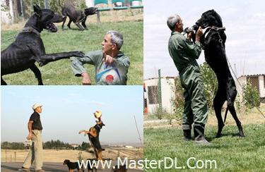 عکس های واقعا دیدنی از تربیت سگ پلیس در ایران!-[www.MasterDL.Com]