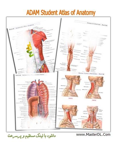 دانلود اطلس آناتومی دانشجویی ADAM Student Atlas of Anatomy
